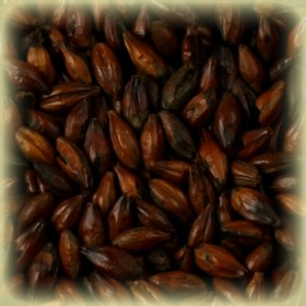 Солод Курский Chocolate (Шоколадный) 900 ЕВС (Kursk), 5 кг